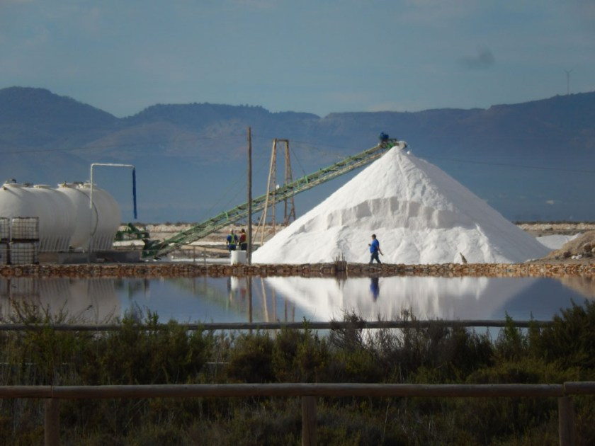 Harvest of the salt