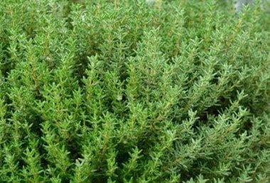Healthy Mediterranean  herbs