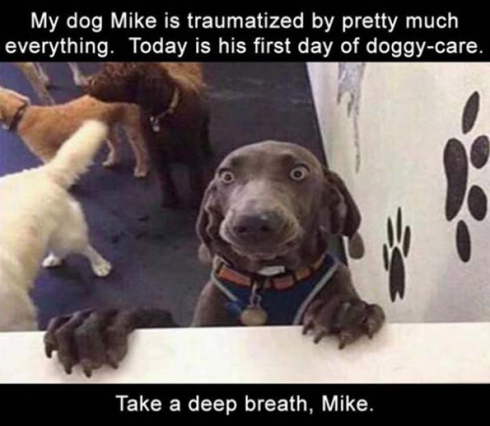 50 Best Funny Dog Memes For National Dog Day | YourTango