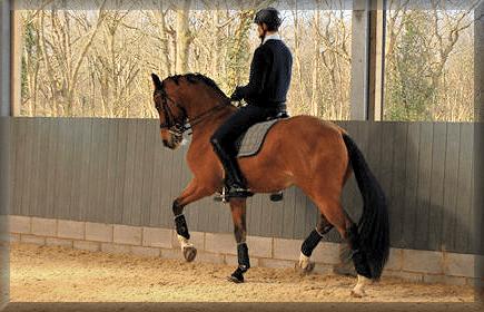horsearena-edged