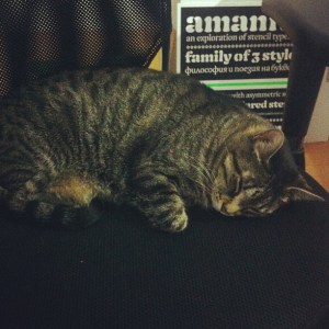 The cat is not helping at all…
