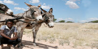 Brian's Column: Road safety back to basics - donkeys in Somalia