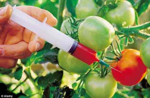 Genetically modified crops essay