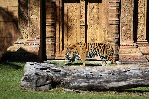 Shame On Us: Protecting Animals by Jailing Them In Zoos