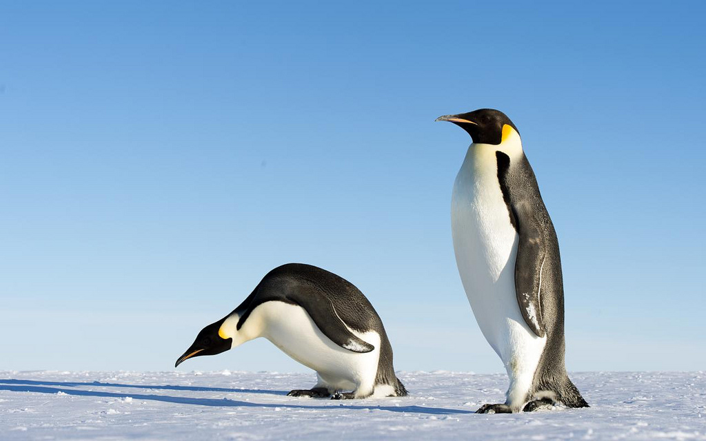 Where To Go To See All 17 Species Of The Worlds Penguins