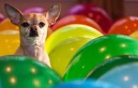 Balon Patlatma Rekoru Kırdı