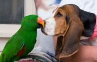 Papağan ve Köpeğin Muhteşem Dostluğu