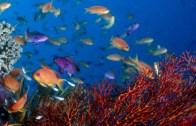 Okyanusun Derinlerindeki Güzellik