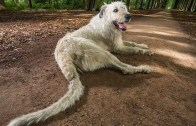 longest-tail-on-a-dog_tcm25-45