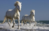 Atlarla Sörf