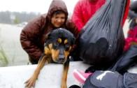 Harvey Kasırgasının Mağduru Hayvanlara Yardım!