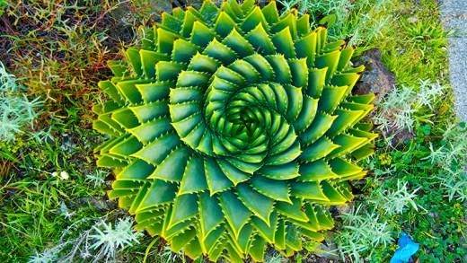 simetri sıra düzen