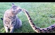 Korkusuz Hayvanlar Ezber Bozuyor