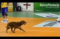 Süper Yetenekli Voleybolcu Köpekler