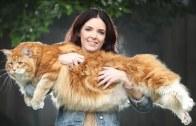 Balonlara Karşı Kedi Ve Köpekler