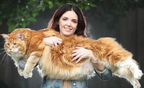 Hayvanlar Kedi Videoları Youwintv