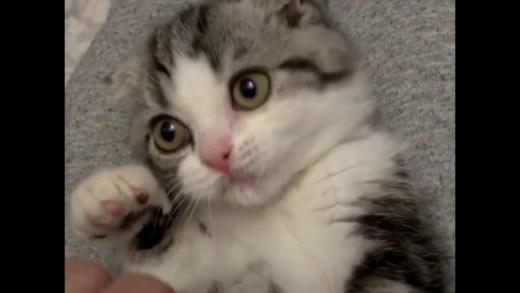 En Komik Kedi Videoları Videoları Youwintv