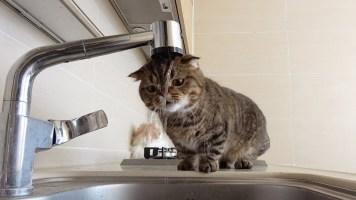 Kısa Film Tadında! Kedilerin Akan Muslukla İmtihanı