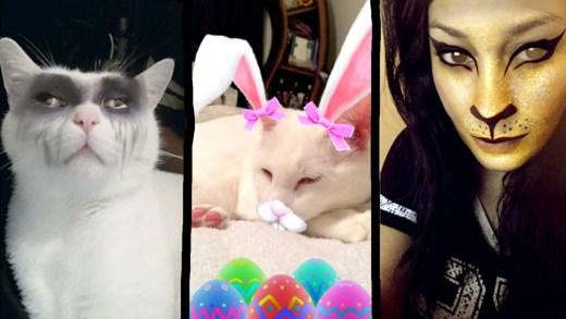 kedi filtresi gören kedilerin harika tepkileri
