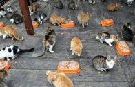 Mozart'ı Duyunca Parktaki Kedi Evlerine Koşan Kediler