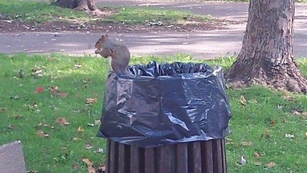 Les écureuils sont très nombreux à Montréal vous pouvez les voir partout dans les parcs de la ville surtout sur le Mont Royal photo blog tour du monde voyage http://yoytourdumonde.fr