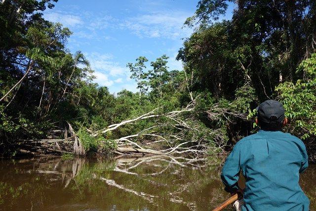 La reserve Pacaya Samiria se trouve au Perou sa superficie est de 20 800km2 et abrite plus de 40 000 ames à voir sur le blog http://www.yoytourdumonde.fr/voyage-perou-reserve-pacaya-samiria/