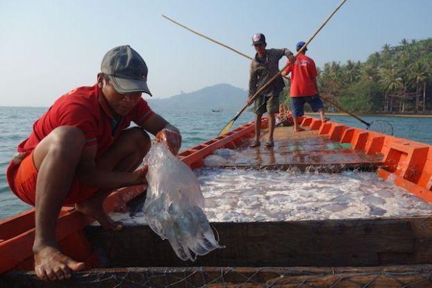 Cambodge - Kep: Alors au cambodge les pecheurs touchent les meduses sans aucune protection. Photo blog http://yoytourdumonde.fr