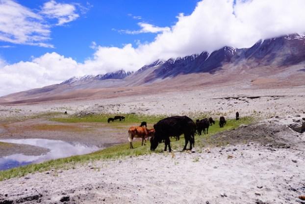 mal des montagnes ladakh photo blog voyage tour du monde http://yoytourdumonde.fr