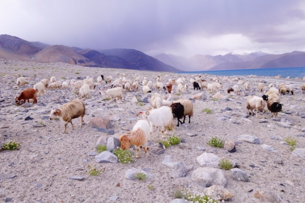 Paysage du Ladakh photo blog voyage tour du monde http://yoytourdumonde.fr