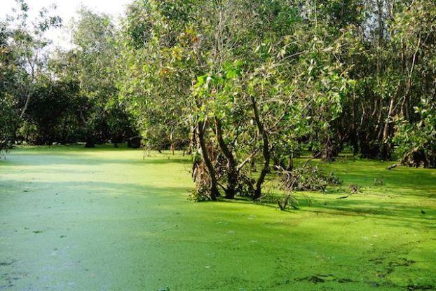 La mangrove de Chau Doc est la plus belle que j'ai vu durant mon tour du monde http://yoytourdumonde.fr