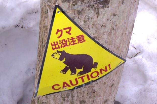 Vous pouvez rencontrer des ours dans les Alpes Japonaises photo blog voyage tour du monde http://yoytourdumonde.fr