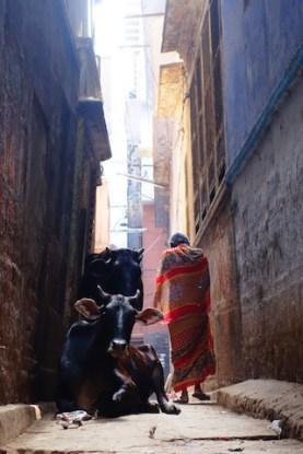 Ancienne partie de la ville de Varanasi qui est un vrai labyrinthe entre vache et humain photo blog tour du monde http://yoytourdumonde.fr