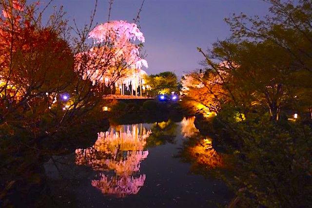 La beauté des parcs et jardins de Kyoto en mars-avril vous amenera dans de superbes moments avec dame nature! photo blog tour du monde http://yoytourdumonde.fr