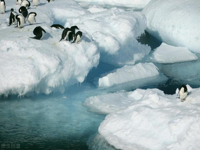 Giant creatures found in the Antarctic seabed! Scientist:If we do not control it, humanity will perish