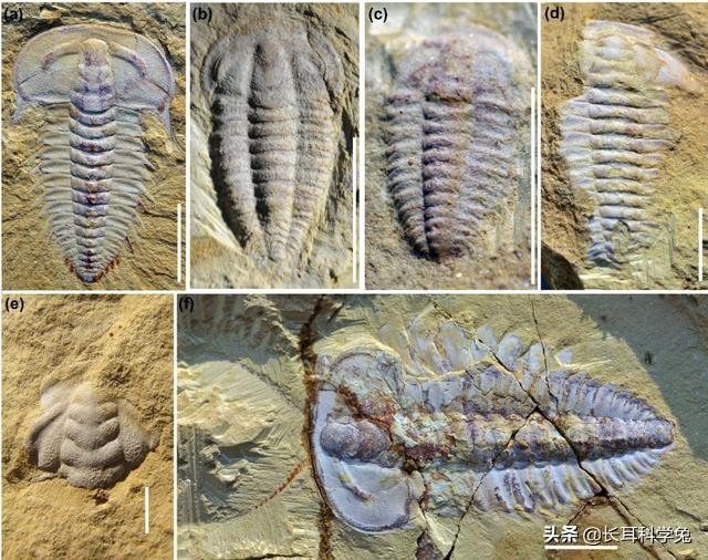 Biological reappearance 550 million years ago? Scientists:The truth about the Cambrian life explosion may be made public