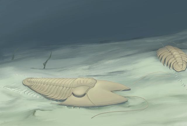 There is a bug that was 500 million years ago, it's called, uh…Fantasy