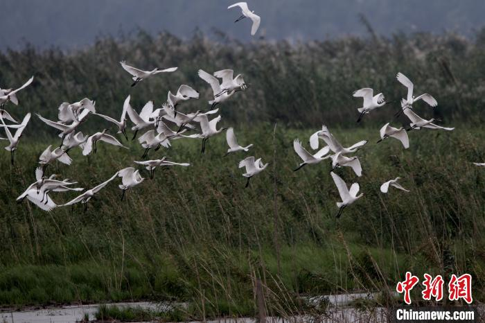 Practicing ecological priority and green development Hunan builds a strong ecological barrier in the hinterland of the Yangtze River