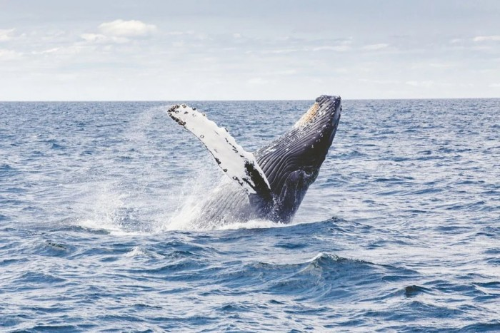 Scientists have discovered that the singing of fin whales can be used to map seismic images of oceanic crust