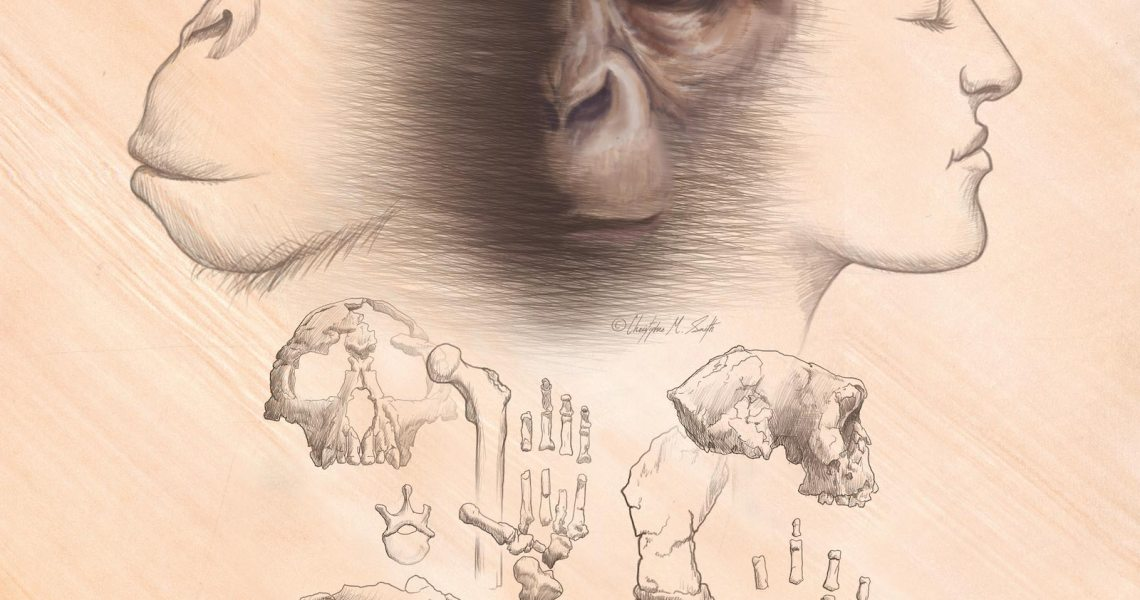 Evolutionary debate: most stories of human origin are incompatible with known fossils
