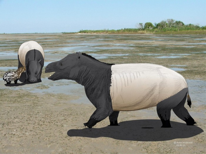 Prehistoric footprint fossils reveal the earliest known evidence of coastal mammals