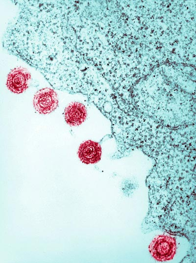 Scientists accidentally discovered fragments of viral genetic material lurking in human DNA