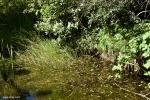 סביבת הגידול של נאדיד המים וגלגל המים