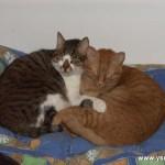 אהבה-חתולית