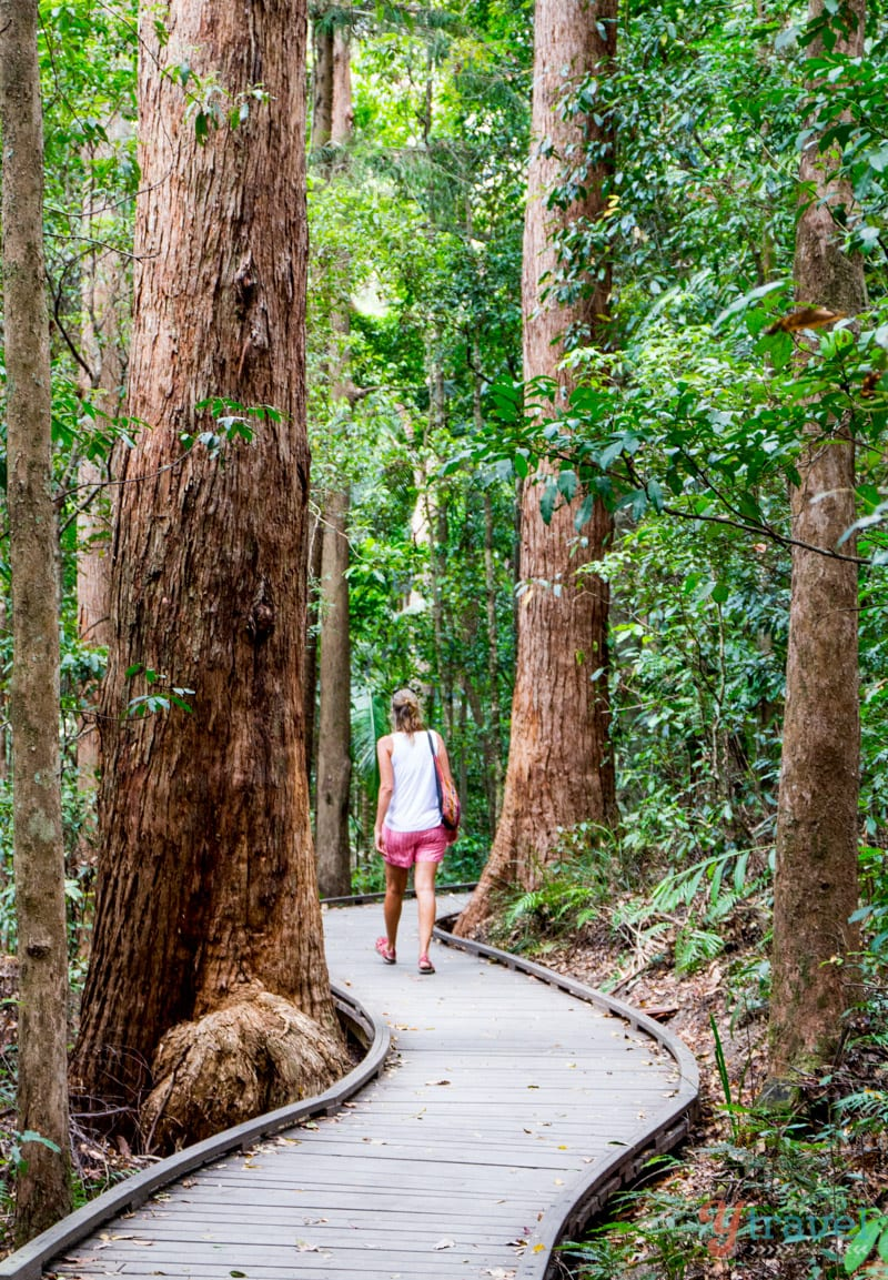 Kondalilla National Park - Sunshine Coast Hinterland, Queensland, Australia
