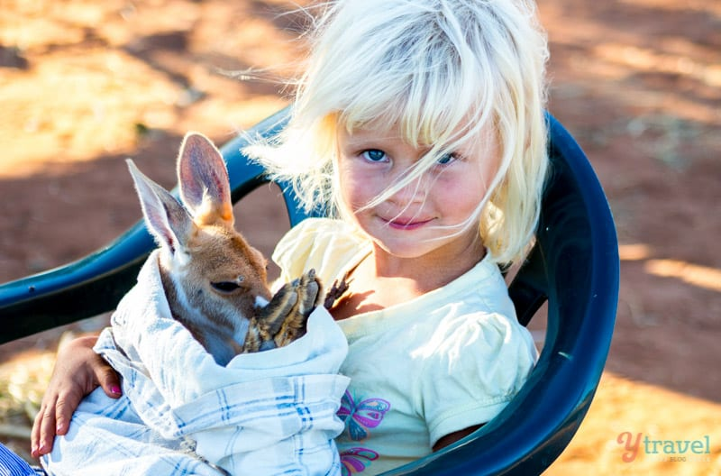 Kangaroo Sanctuary, Alice Springs