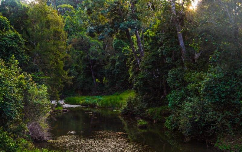 Eungella National Park Mackay