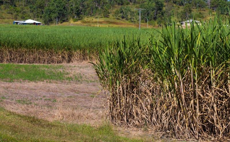 Cane fields Mackay