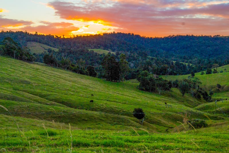 Eungella National Park Mackay (2)