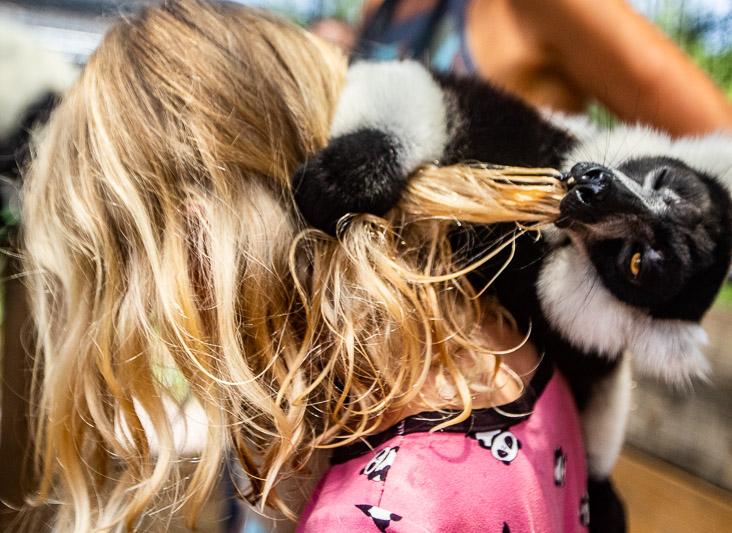 Lemurs at the North Florida Wildlife Center