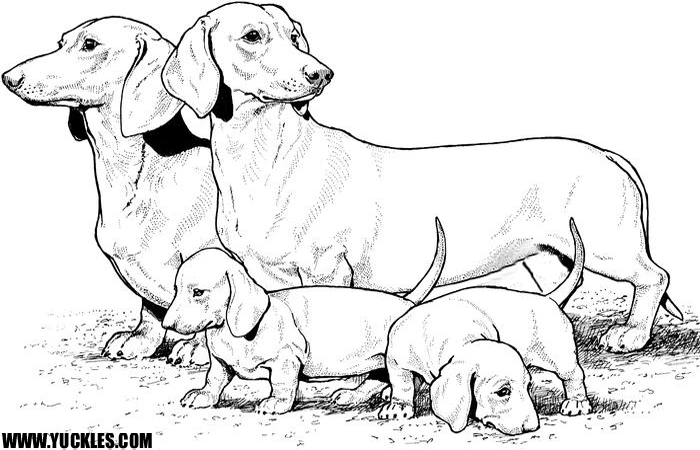 dachshund coloring pageyuckles!